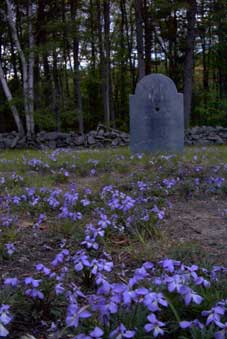Blue flowers at Walter Gilson's headsone