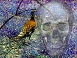 pheasant and skull