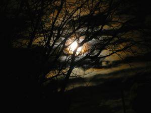 Moon in trees - haunted Walpurgis